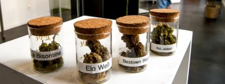 Negozio specializzato in cannabis