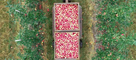 L'algoritmo italiano che predice la grandezza della frutta