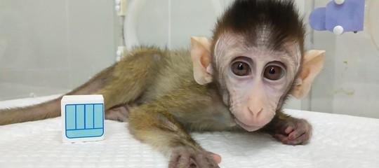 scimmie clonate cina