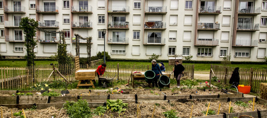 Gli orti urbani salveranno il mondo