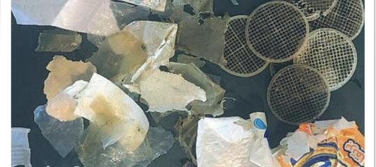 I dischetti di plastica che hanno ucciso una caretta for Depuratore acqua tartarughe