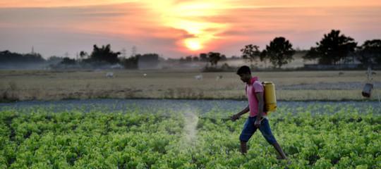 La quantità di pesticidi presenti nei cibi che mangiamo