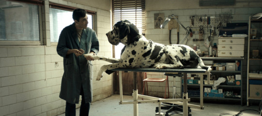 David Donatello: incetta di nomination per 'Dogman' e 'Chiamami col tuo nome'