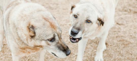 sbranata cani Lampedusa