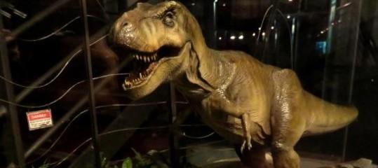 L'America riscopre il tremendo fascino del Tirannosauro