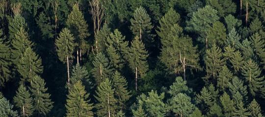 giornata internazionale foreste