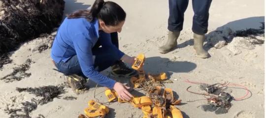 telefoni garfield spiaggia