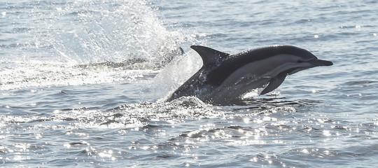 clitoride delfini sessualita