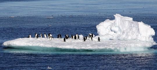 ghiacciaio antardite pinguini
