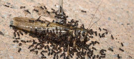 comprare formiche