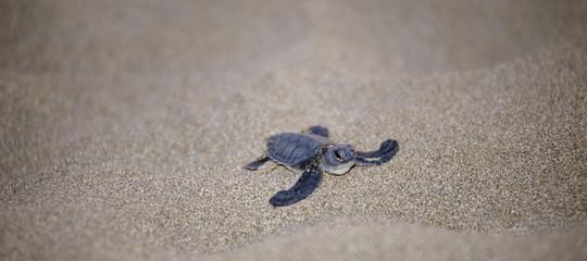 Allarme Onu su esitinzione, 1 specie su 8 sparirà a breve
