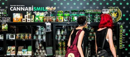 salvini chiusura negozi cannabis