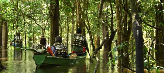 foreste pluviali deforestazione dati