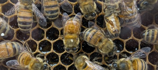 emergenza miele raccolta azzerata api
