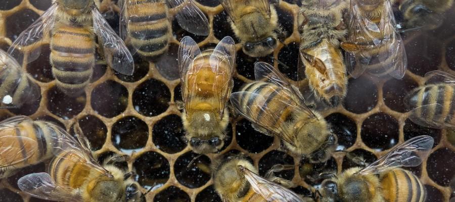 Azzerata la raccolta del miele a causa del maltempo