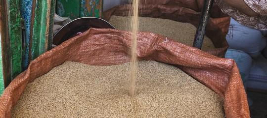La battaglia legale per il super grano Teff, simbolo dell'Etiopia e ideale nelle diete