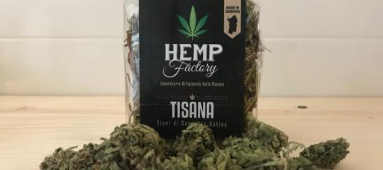 cassazione cannabis light reato