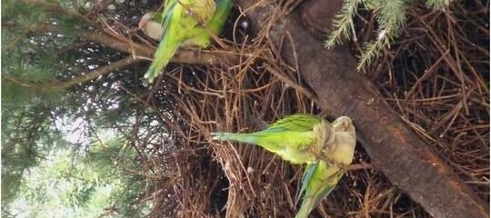 pappagallini puglia frutteti