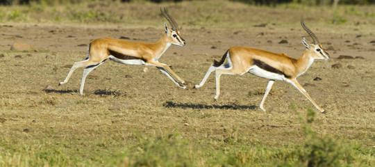 namibia animali asta siccita
