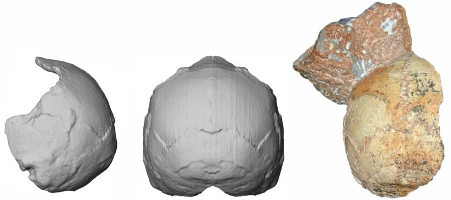 Trovato in Europa il più antico esemplare di Homo sapiens non africano