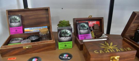 cassazione cannabis lightsentenza motivazioni