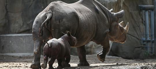 rinoceronte bond