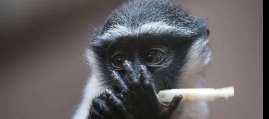 specie animali rischio estinzione