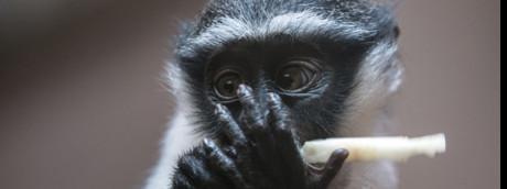 Il 27% delle specie animali nel mondo è a rischio estinzione