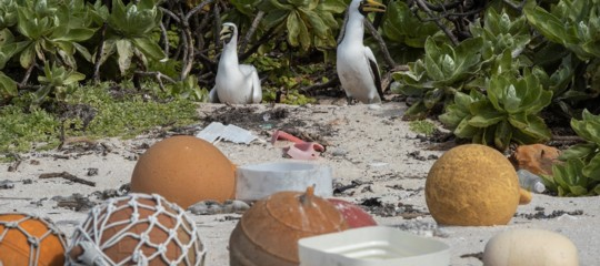 isola henderson pacifico plastica