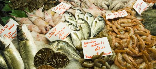 riconoscere pesce fresco
