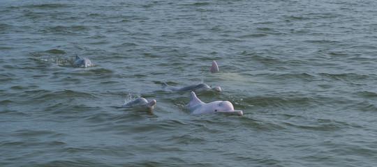 strage delfini