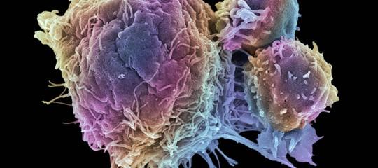 cancro studio italiano scopre meccanismo che blocca la crescita