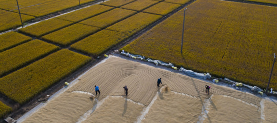 cambiamenti climatici sicurezza alimentare