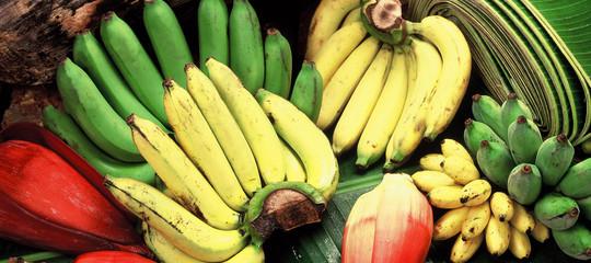 banane rischio estinzione