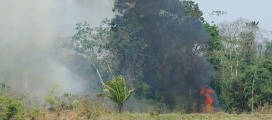 incendi amazzonia foto false