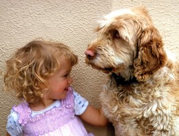 E' la giornata del cane. I romanzi e i film che celebrano una grande amicizia