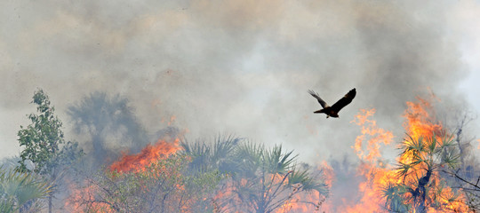 incendi africa savana agricoltura