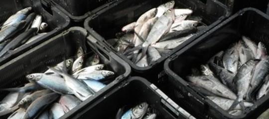 stop pesce freso fermo biologico tirreno ionio