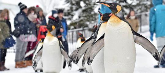 pinguini gay identita genere