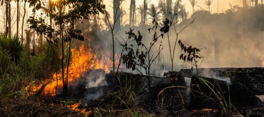 alberi foreste amazzonia cambiamenti climatici