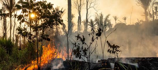 mafia legno amazzonia