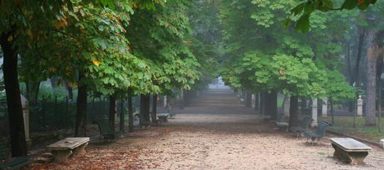 alberi inquinamento verde urbano