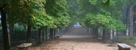 Nelle città ci sono abbastanza alberi per assorbire l'inquinamento?