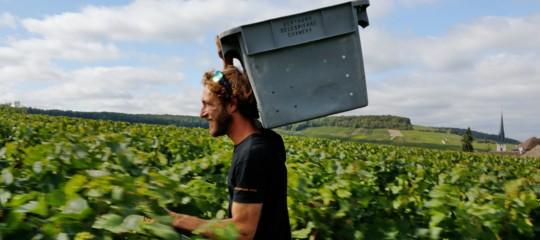 vendemmia produzione vino