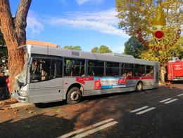 Un autobus è finito contro un albero a Roma. 29 feriti