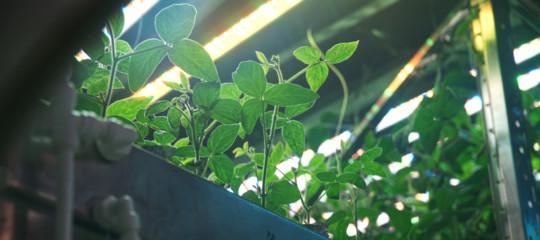 coltivare verdure luna marte
