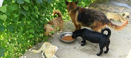 batteri salmonella carne cruda cani