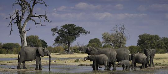elefanti morti siccita cambiamenti climatici