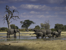 Già 55 gli elefanti morti di fame e sete in un parco nazionale dello Zimbawe