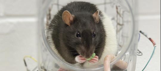 ratti guida stress